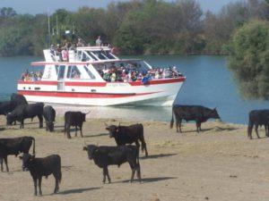 bateau camargue